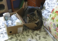 Gilbert inhabits the box.