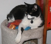 Luna keeps the toys warm.