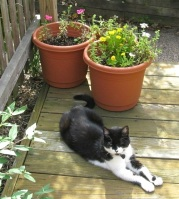 Luna supervises the potted plants.